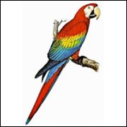 Imãs de Geladeira - Arara Colorida
