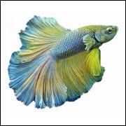 Imãs de Geladeira - Peixe Beta Verde