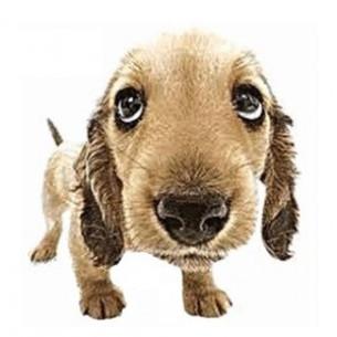 Imãs de Geladeira - Cachorro Marron