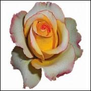 Imãs de Geladeira - Rosa Amarela