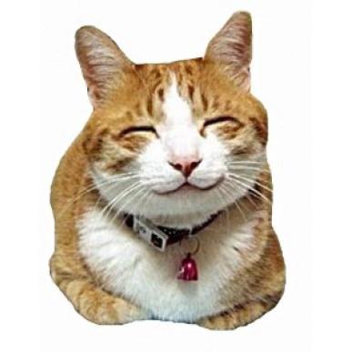 Imãs de Geladeira - Gato Sorrindo