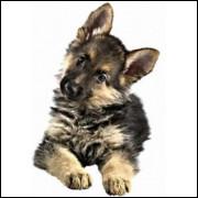 Imãs de Geladeira - Cachorro Pastor Alemão