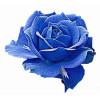Imãs de Geladeira - Flor Rosa Azul