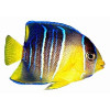 Imãs de Geladeira - Peixe Amarelo e Azul