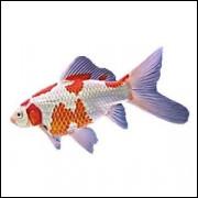 Imãs de Geladeira - Peixe Branco e Vermelho