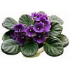Imãs de Geladeira - Flor Violetas