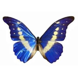 Imãs de Geladeira - Borboleta Azul e Branca I